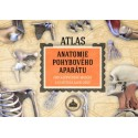 ATLAS - ANATOMIE POHYBOVÉHO APARÁTU